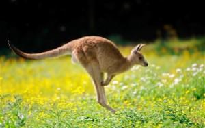 AUSTRALIA17-SEMESTAFAKTA