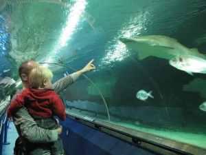 semestafakta-Deep Sea World, North Queensferry