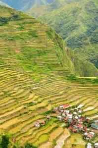 semestafakta-Rice Terraces