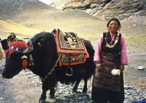 semestafakta-yaks