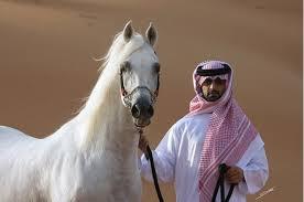 semestafakta-Arabian horses