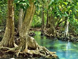 semestafakta.bangladesh largest mangrove