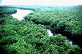 semestafakta.bangladesh largest mangrove2