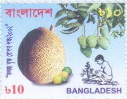semestafakta.nangka bangladesh