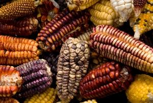 semestafakta-peruvian corn