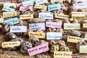 semestafakta-peruvian potato2
