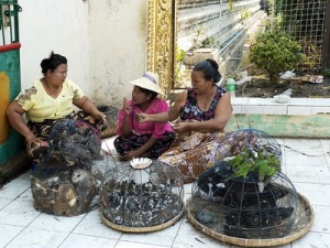 semestafakta-caged bird seller in myanmar