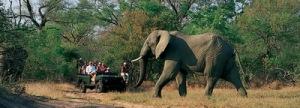 semestafakta-Kruger National Park2