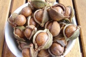 semestafakta-macadamia nuts