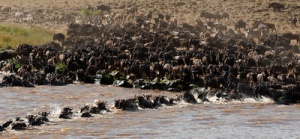 semestafakta-The Maasai Mara Migration