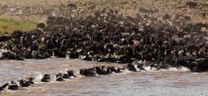 semestafakta-The Maasai Mara Migration