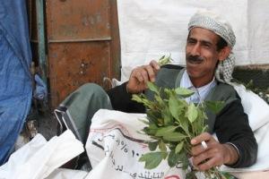 semestafakta-Chewing qat leaves