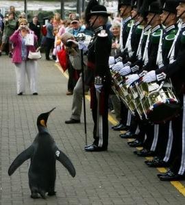 semestafakta-penguin knight