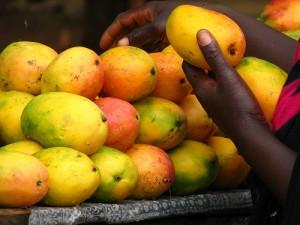 semestafakta-african mango