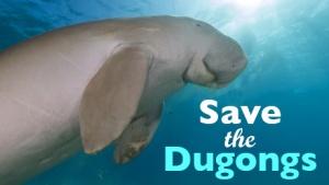 semestafakta-Dugongs