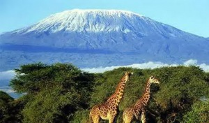 semestafakta-kilimanjaro