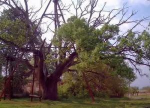 semestafakta-oak