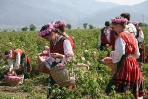 semestafakta-rose valley