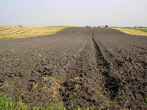semestafakta-fertile black soil