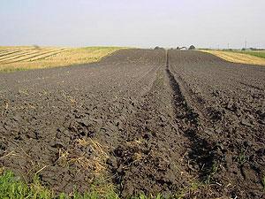 semestafakta-fertile black soil