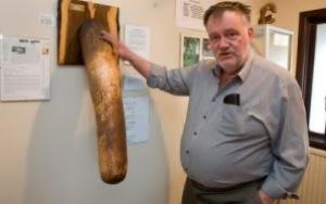 semestafakta-Icelandic Phallological Museum