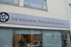 semestafakta-Icelandic Phallological Museum3