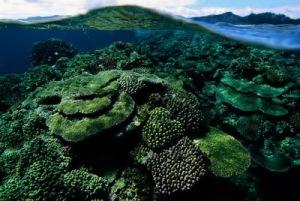 semestafakta-Great Astrolabe Reef
