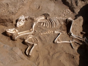 semestafakta- horse fossil
