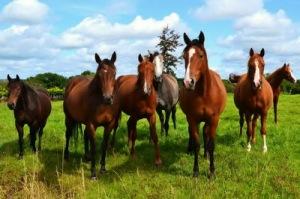 semestafakta-horse of ferghana