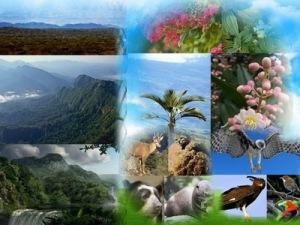 semestafakta-Madidi National Park2