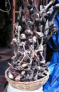 semestafakta-mummified llama fetus