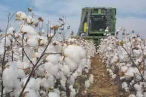 semestafakta-Turkmenistan cotton