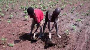 semestafakta-child labor in mali3