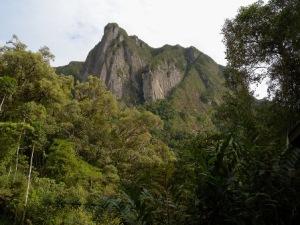 semestafakta-Marojejy National Park2
