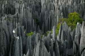 semestafakta-Reserve Tsingy de Bemaraha5
