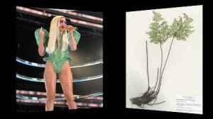 semestafakta-Lady Gaga fern