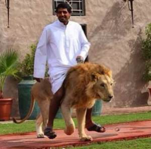 semestafakta-lion in dubai