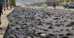 semestafakta-lluvia de peces