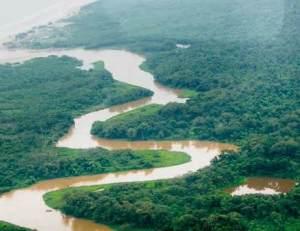 semestafakta-Platano Forest