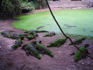 semestafakta-The Kachikally crocodile pool