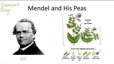 semestafakta-Gregor Mendel