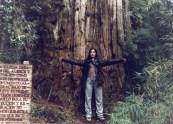 semestafakta-alerce tree2