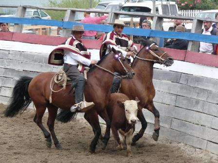 semestafakta-Rodeo